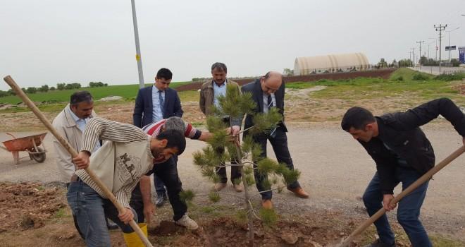 Photo of Kahta Adliyesi Bahçesi Ağaçlandırılıyor