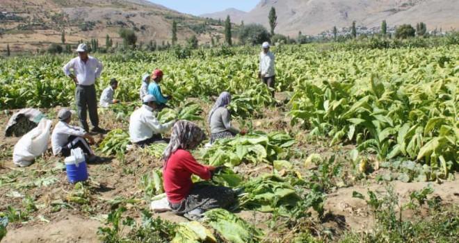 Photo of Çelikhan'lı Tütün Üreticilerinden Basın Açıklaması
