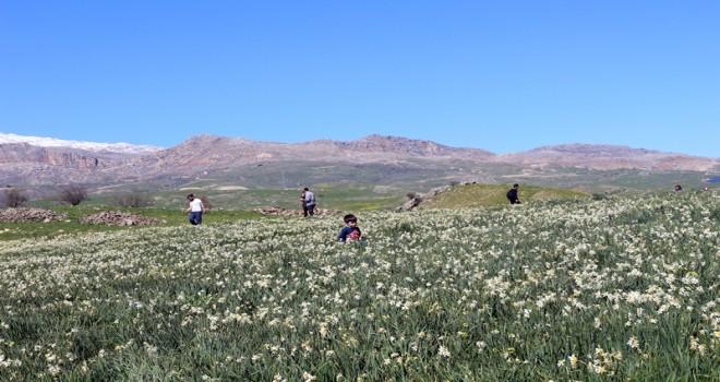 Photo of Botanik Turizmin Ayak Sesleri