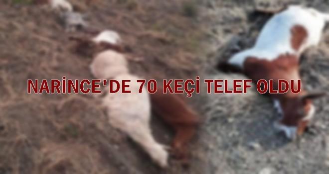 Photo of 70 Küçükbaş Hayvan Bilinmeyen Bir Nedenle Öldü