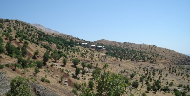 Photo of Çamiçi Köyü