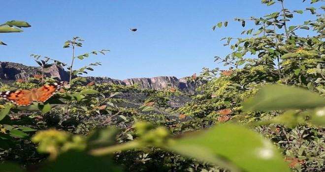 Photo of Gerger'de Kelebekler Halkı Tedirgin Ediyor