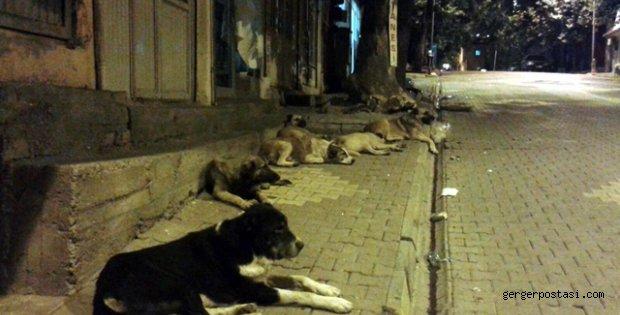 Photo of Gerger Sokakları Köpeklere Emanet
