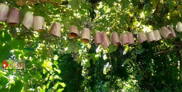 Photo of Gerger'de Patlıcan Kurusu (KODIK) Mevsimi Başladı