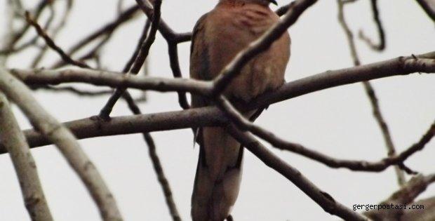 Photo of Soğuk Havalar Kuşları da Etkiledi